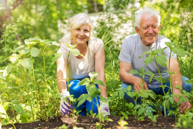 How Seniors Can Benefit From Gardening